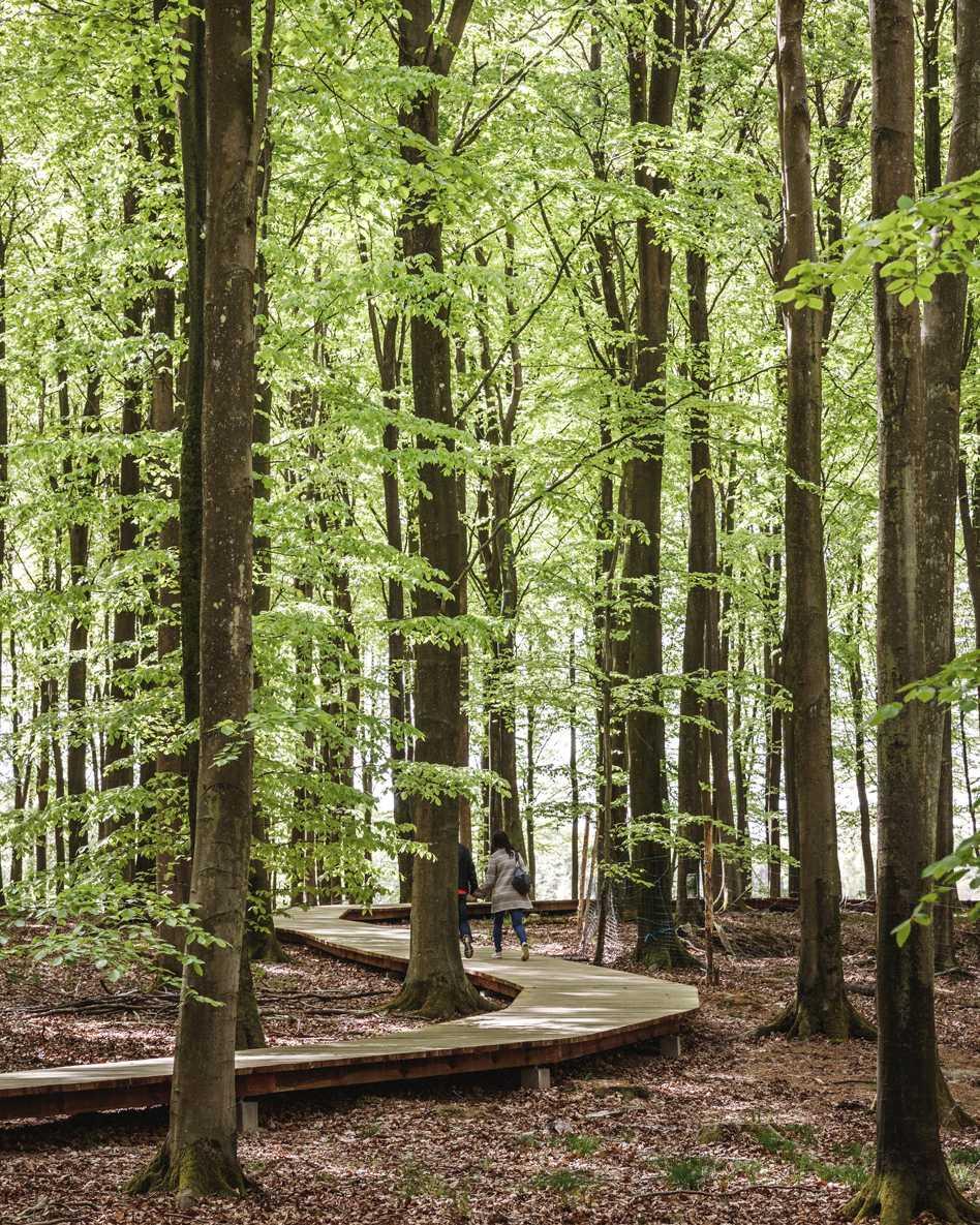 Camp Adventure Park  - 19 4.2 38