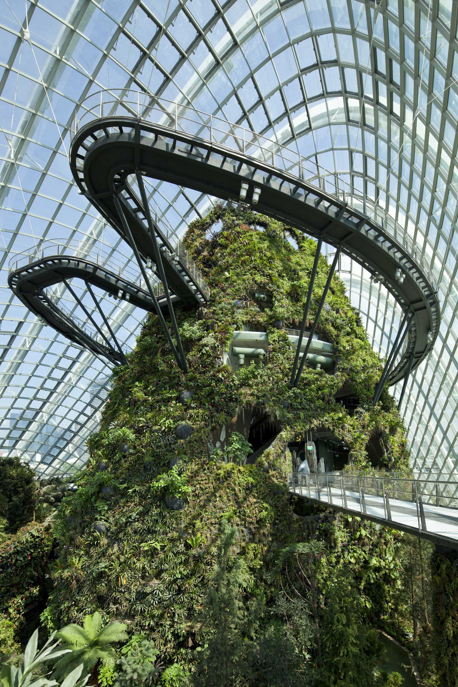Cloud Forest  - D 34