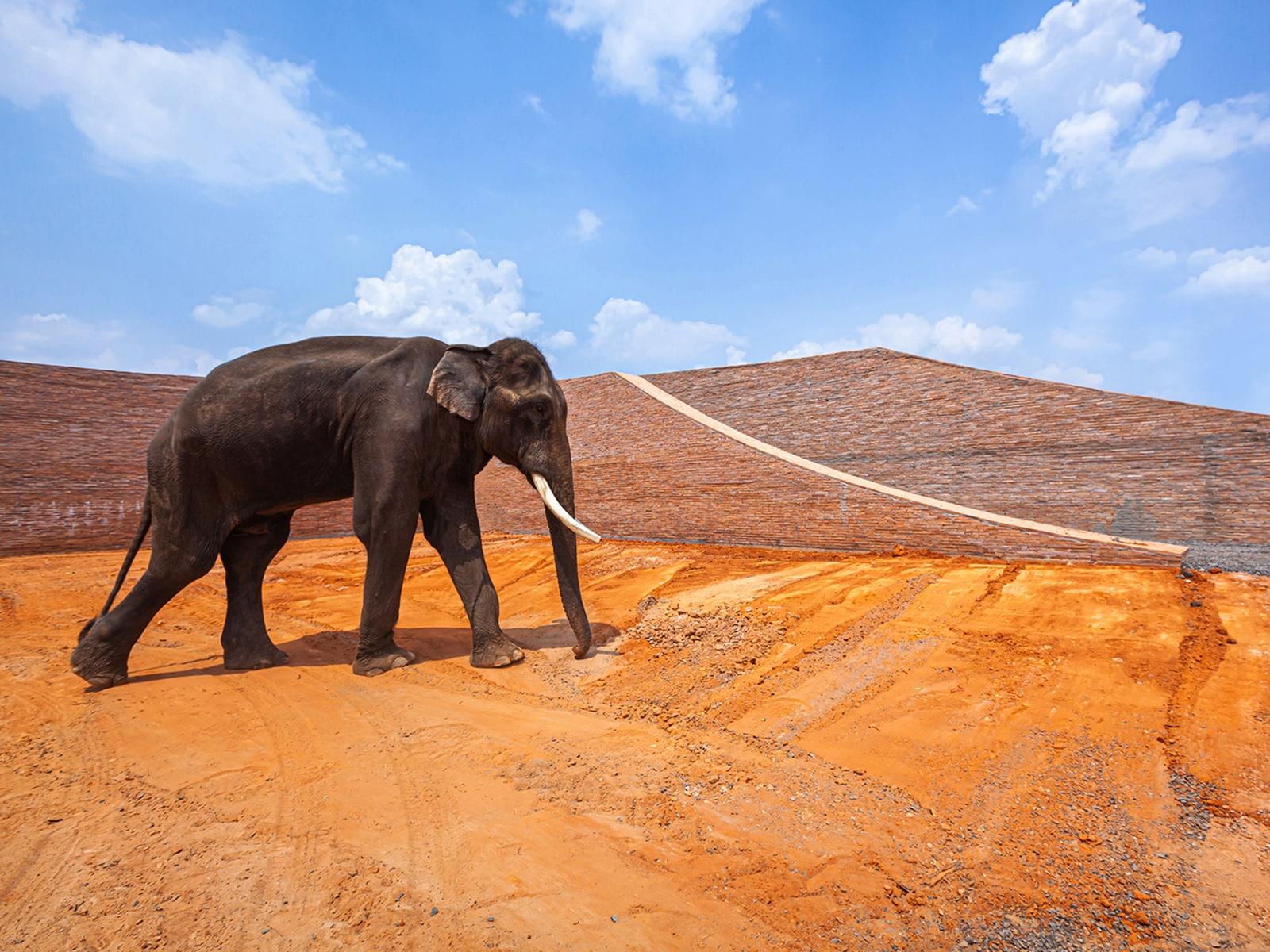 Elephant World  - 3.1 38